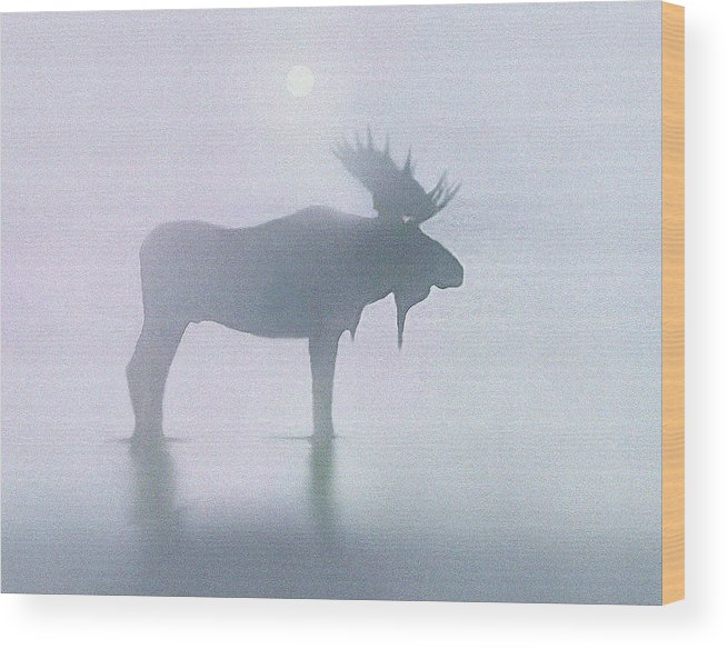 Landscape Wood Print featuring the painting Fog Moose by Robert Foster