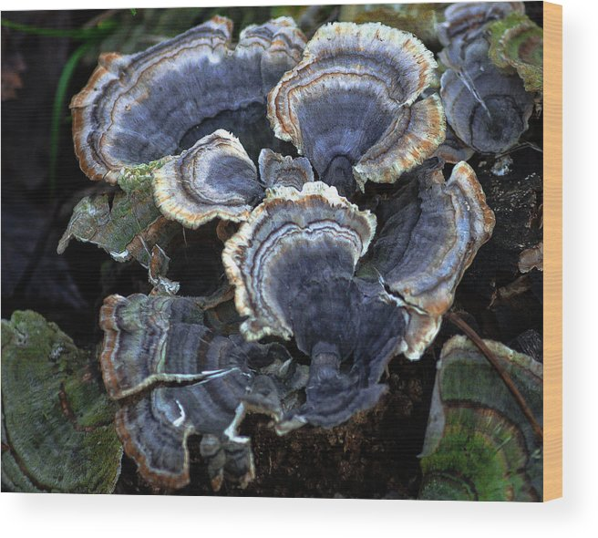 Nature Wood Print featuring the photograph Fungi by Steve Marler