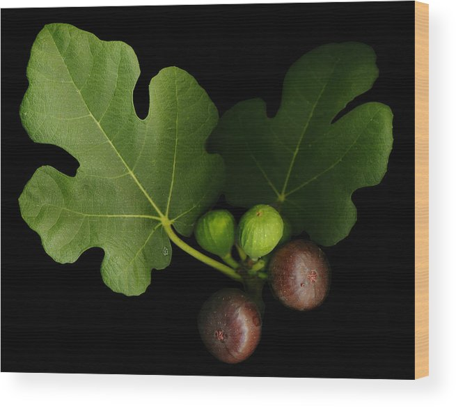 Figs Wood Print featuring the photograph Gelini's Fig Tree by Deborah J Humphries