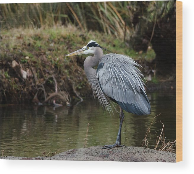 Hero Wood Print featuring the photograph Great Blue Heron On The Watch by George Randy Bass