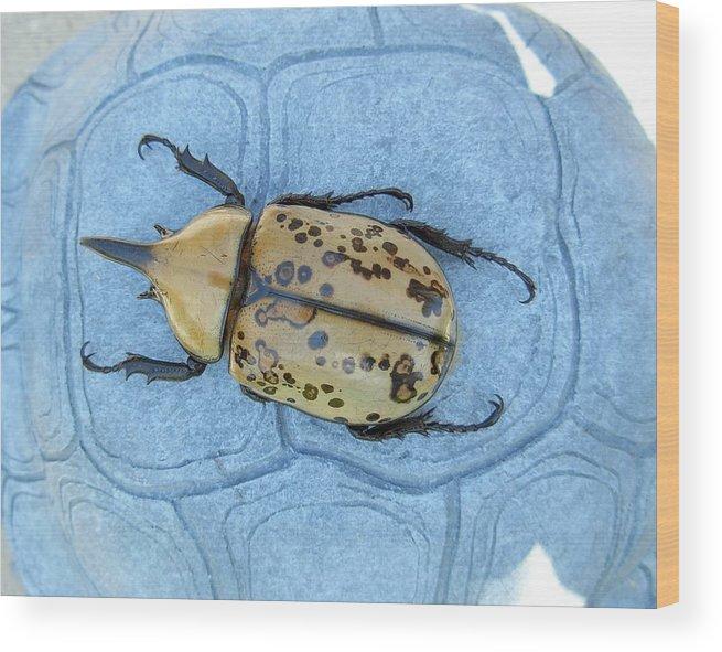 Large Golden Hercules Beetle Wood Print featuring the photograph Hercules Beetle by Jeanne Kay Juhos