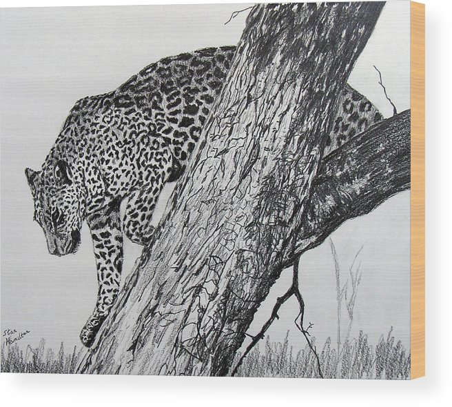 Original Drawing Wood Print featuring the drawing Jaquar In Tree by Stan Hamilton