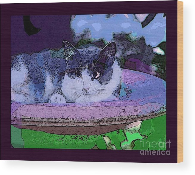 Cat Wood Print featuring the photograph Kitty Blue by David Carter