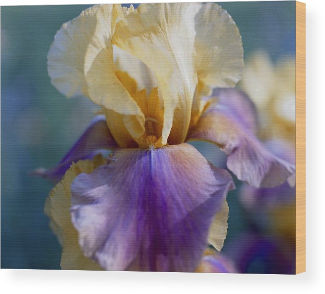 Iris Wood Print featuring the photograph Lavender And Gold Iris by George Ferrell