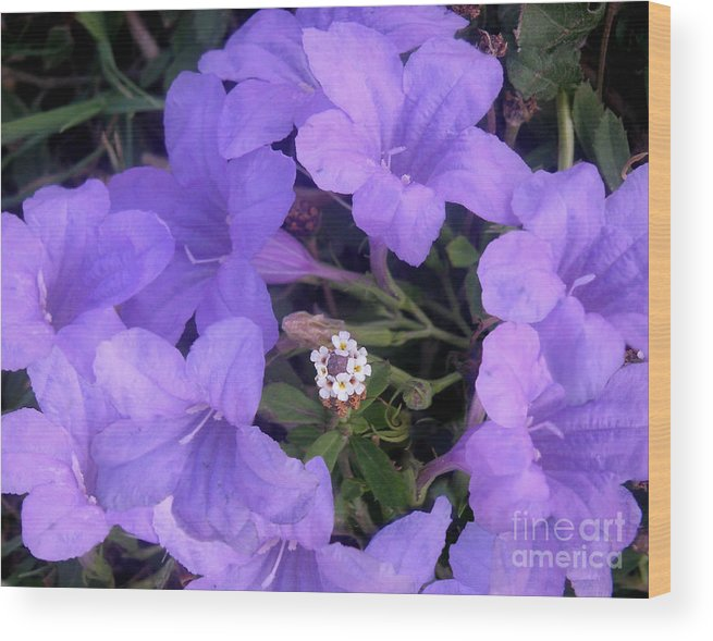Nature Wood Print featuring the photograph Nature In The Wild - Ring Around The Posy by Lucyna A M Green