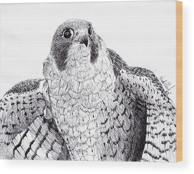 Wildlife Wood Print featuring the drawing Peregrine Falcon by Wade Clark