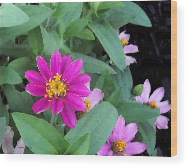 Flowers Wood Print featuring the painting Pinky by Diana Gonzalez