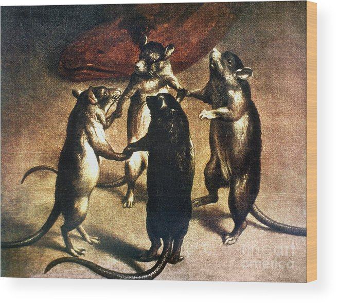 1800 Wood Print featuring the photograph Plague: Dance Of The Rats by Granger