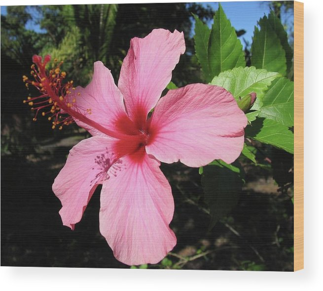 Pink Flower Wood Print featuring the photograph Red And Pink Fireworks by Arry Murphey
