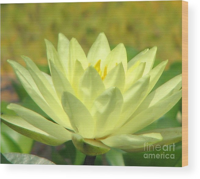 Lillypad Wood Print featuring the photograph Shades by Amanda Barcon
