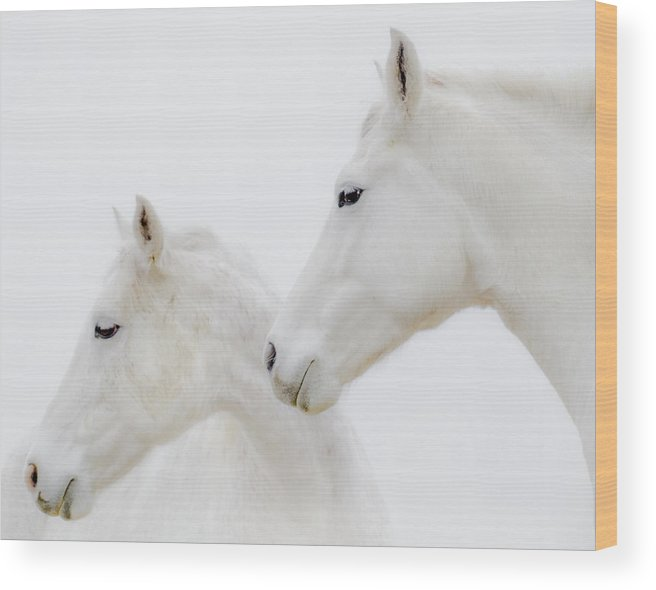 White Horses Wood Print featuring the photograph She Dreamed Of White Horses by Ron McGinnis