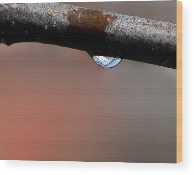 Raindrop Wood Print featuring the photograph Transformations by Marilynne Bull