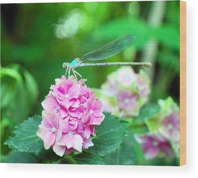 Dragonfly Wood Print featuring the photograph Turquiose Dragonfly And Hydrangea by Heather S Huston