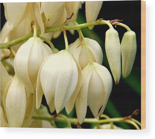 Yuca Wood Print featuring the photograph Yucca Flower by Susanne Van Hulst