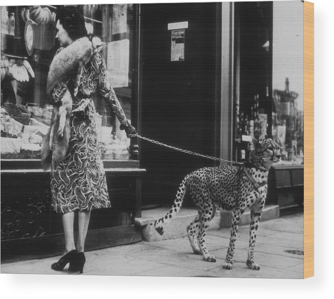 Pets Wood Print featuring the photograph Cheetah Who Shops by B. C. Parade