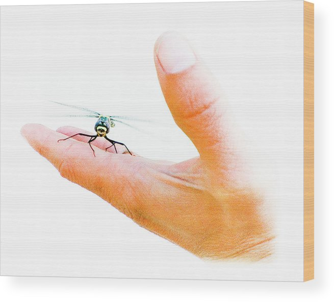 Dragonfly Wood Print featuring the photograph Dragonfly by Jason Leonti