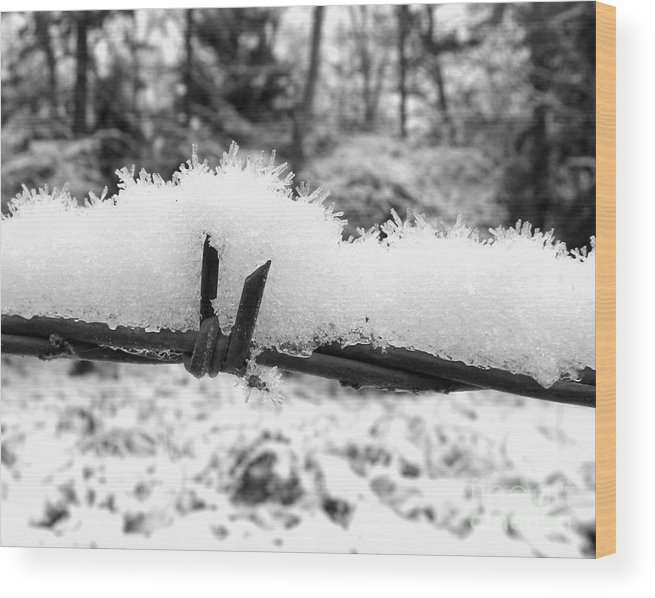 Barbed Wire Wood Print featuring the photograph Barbed Wire In Snow by Tisha Clinkenbeard