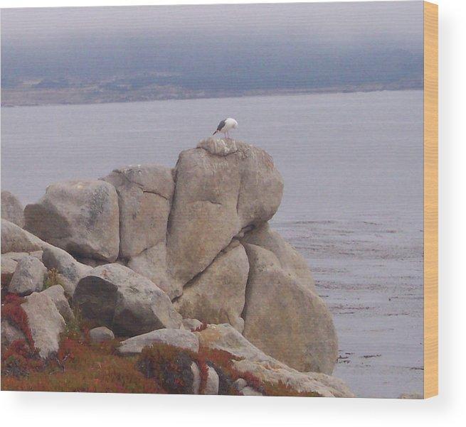 Bird Wood Print featuring the photograph Bird On A Rock by Pharris Art