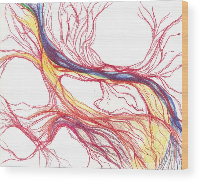 Capillaries Wood Print featuring the drawing Capillaries by Lindsay Clark