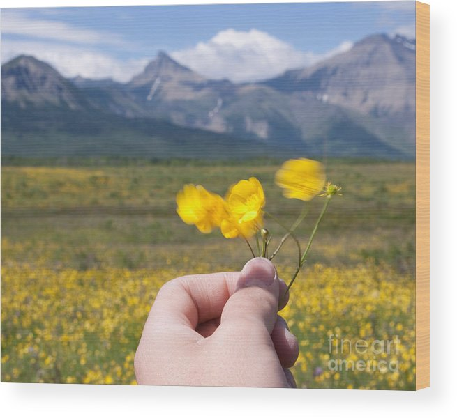 Banff National Park Wood Print featuring the photograph Captured by David Crane