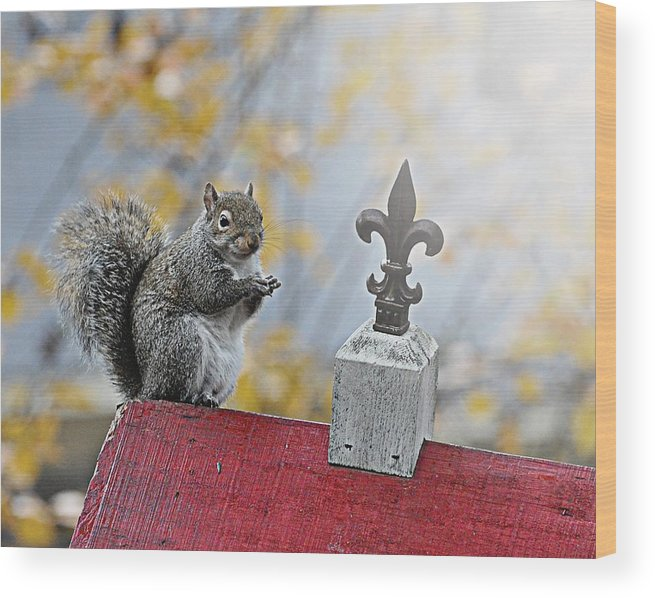 Grey Squirrel Wood Print featuring the photograph Dining With A Flare by Pam Garcia