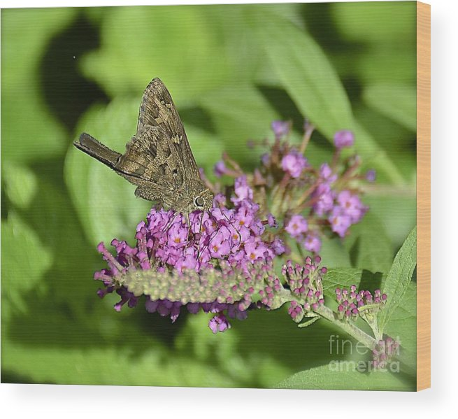 Butterfly Wood Print featuring the photograph Dorantes Longtail by Carol Bradley