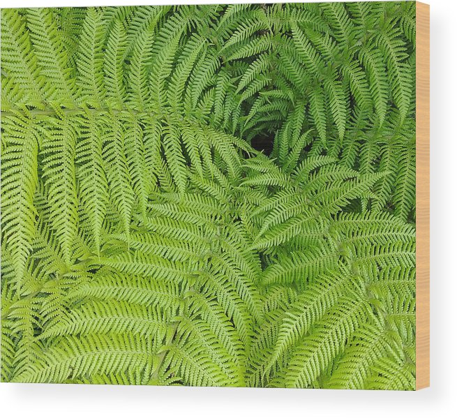 Fern Wood Print featuring the photograph Down The Fernhole by Georgette Grossman