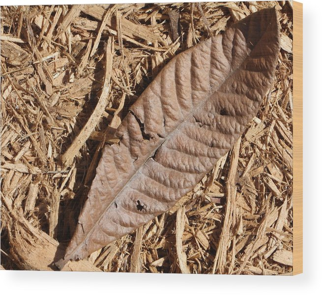 Dried Leaf Wood Print featuring the photograph Dried Leaf by Terry Fleckney