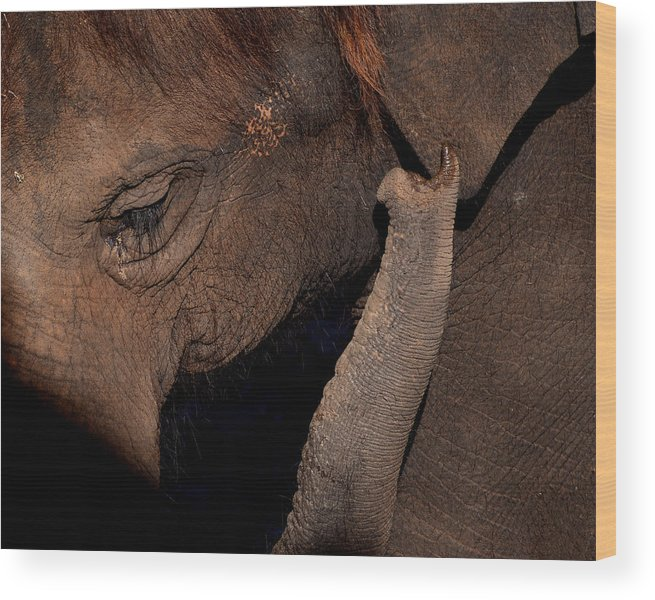 Elephant Wood Print featuring the photograph Elephant by Andrea Wright