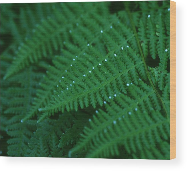Fern Wood Print featuring the photograph Fern by Christopher Meade