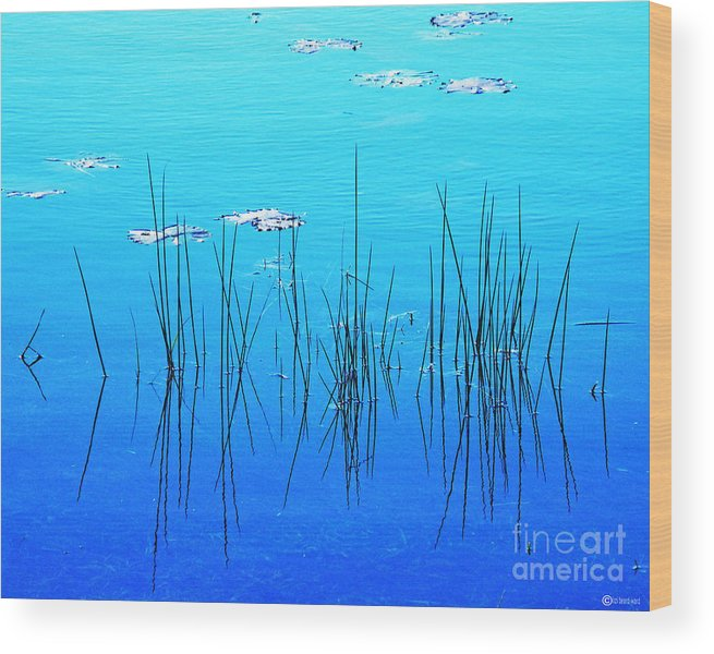 Water Wood Print featuring the digital art Lacassine Pool Reeds by Lizi Beard-Ward