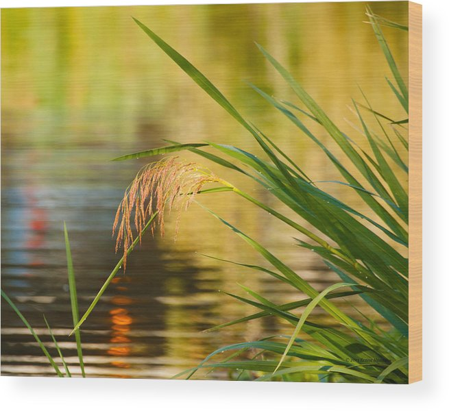 Lake Reflections Wood Print featuring the photograph Lake Reflections by Ernest Hamilton