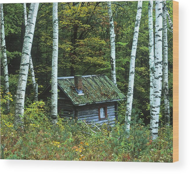 Landscape Wood Print featuring the photograph Log Cabin In The Birch Forest Vermont by Joe Palermo