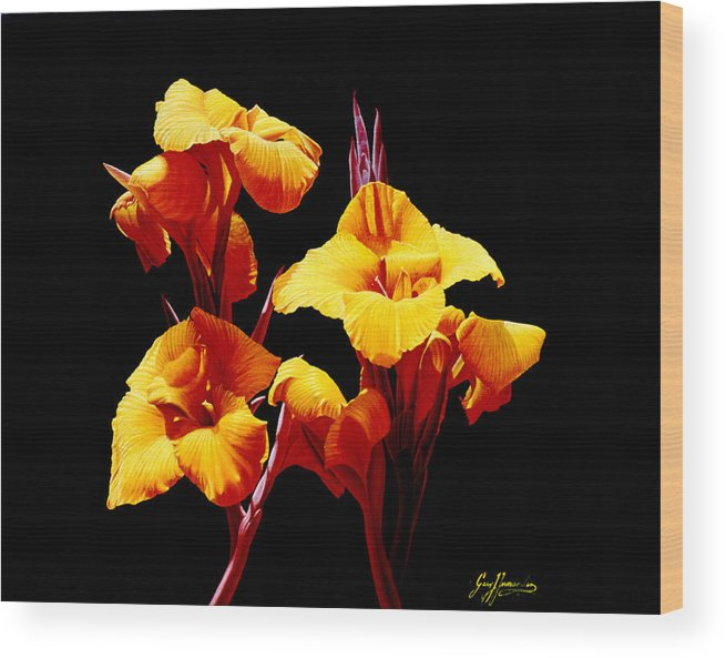 Yellow Cannas Wood Print featuring the painting Orange Cannas by Gary Hernandez