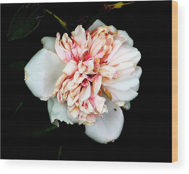 Flower Wood Print featuring the photograph Pretty In Pink by Sheri Copeland