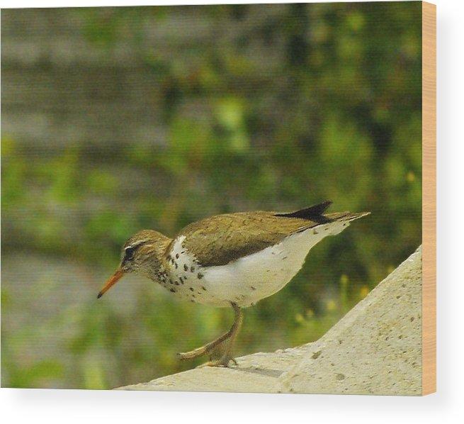 Bird Wood Print featuring the photograph Riverside Bird by John Greaves