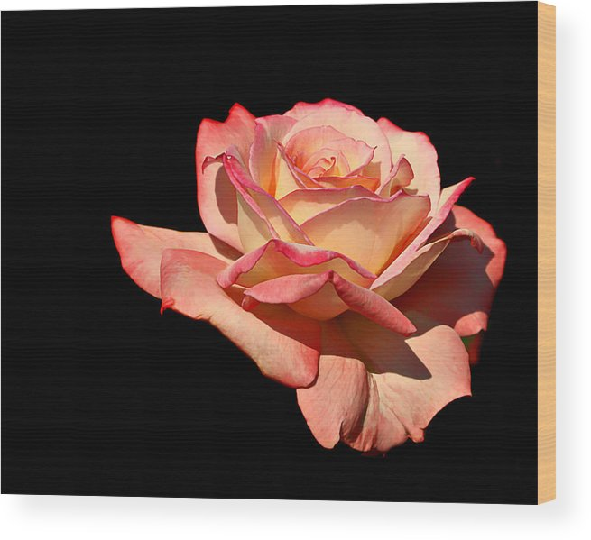 Rose Wood Print featuring the photograph Rose On Black Background by Nikolyn McDonald