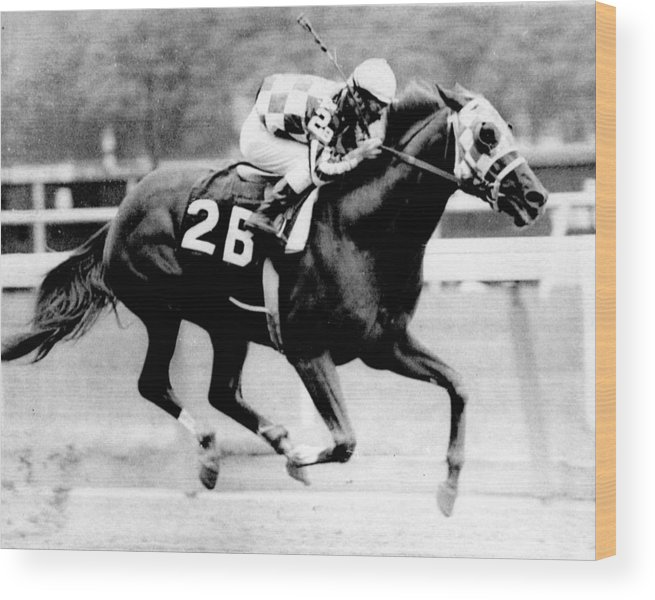 Classic Wood Print featuring the photograph Secretariat Vintage Horse Racing #12 by Retro Images Archive
