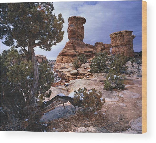 Utah Wood Print featuring the photograph Stone Face by Tom Daniel