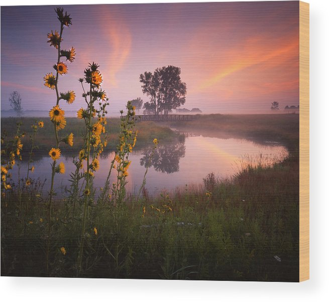 Sunset Wood Print featuring the photograph Sunflower Sunrise by Ray Mathis