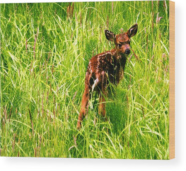 Deer Wood Print featuring the photograph The Young Prince by Benjamin Yeager