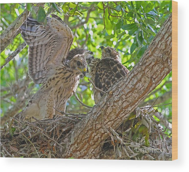 Hawks Wood Print featuring the photograph Wing Test by Deborah Benoit
