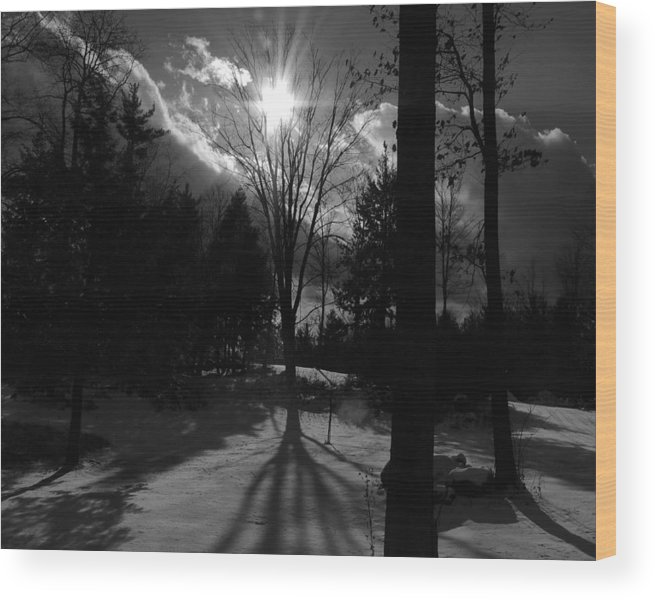 Tree Wood Print featuring the photograph Winter Shadow by Mim White