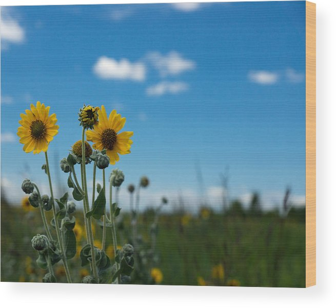 Yellow Wood Print featuring the photograph Yellow Flower On Blue Sky by Photographic Arts And Design Studio