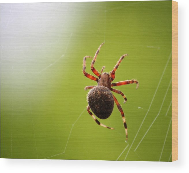Spider Wood Print featuring the photograph Tangled Web by Annie Babineau