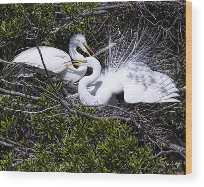 April Wood Print featuring the photograph A Happy Couple by Phill Doherty