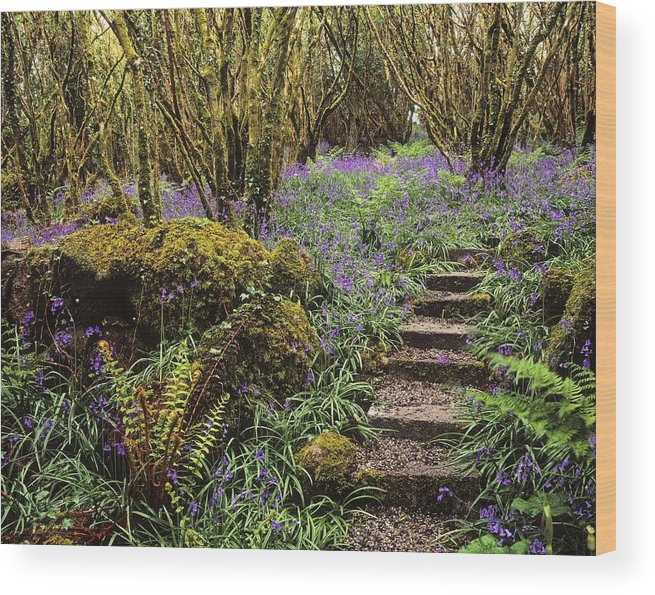 Pathway Wood Print featuring the photograph Ardcarrig Gardens, Co Galway, Ireland by The Irish Image Collection