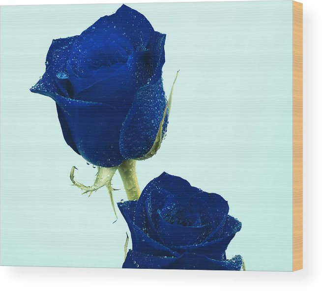Blue Roses Wood Print featuring the photograph Blue Roses by Gord Patterson