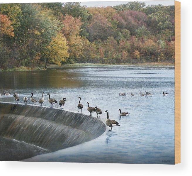 Geese Wood Print featuring the photograph Dam Geese by Chuck Ferrara