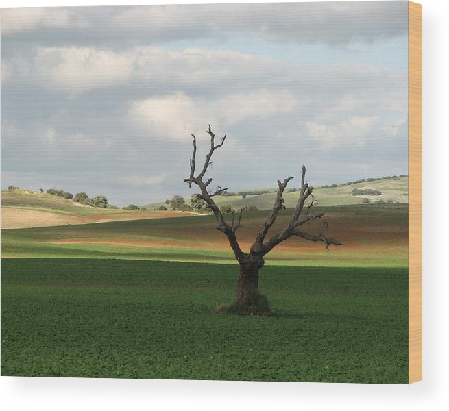 Landscape In Andalucia Wood Print featuring the photograph Don Quijote by Suz Landay